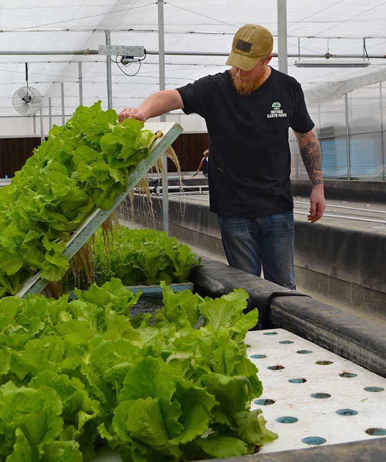 Lucky Clays Farm hydroponic lettuce