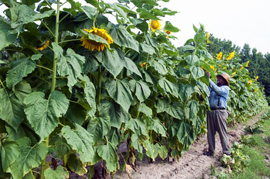 Rethinking community gardens carolina country for North carolina vegetable gardening