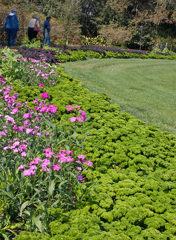 Parsley Border