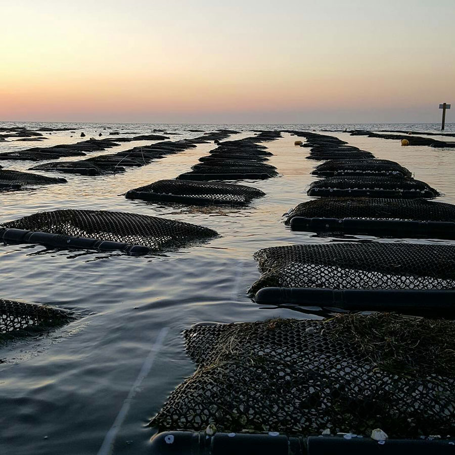 Cape Hatteras Oyster Company