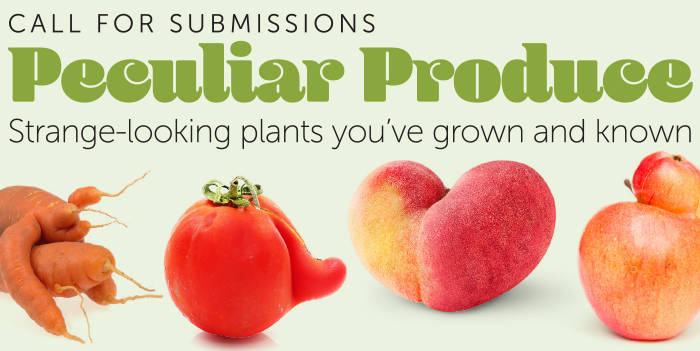 call for submissions - piculiar produce