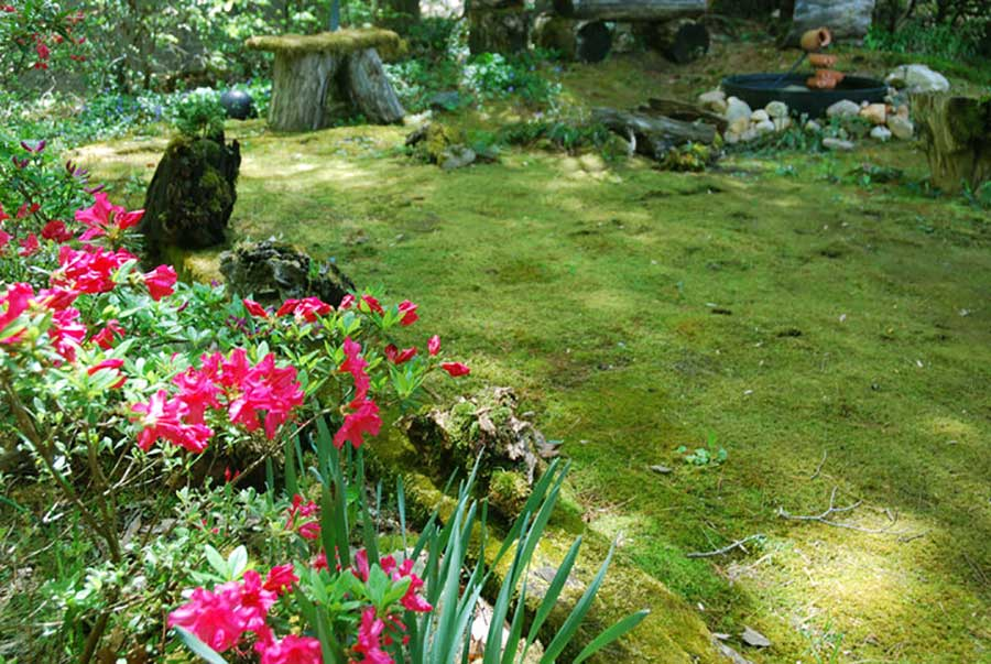 Go Green With Moss Carolina Country