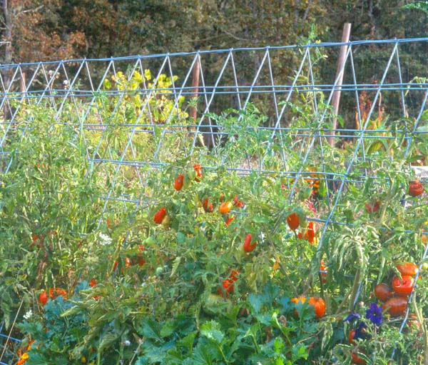 vertical-TOMATOES-ON-PANEL-TRELLIS