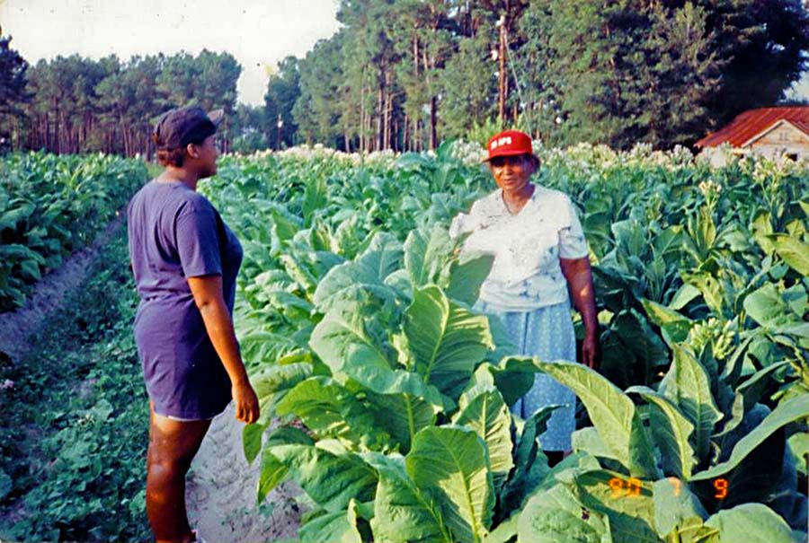 The Women Tobacco Farmers In My Life Carolina Country