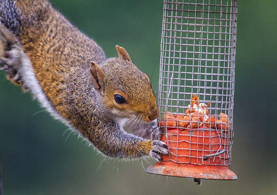 squirrels feeder bird off feeders squirrel pin keep baffle pinterest