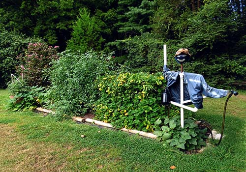 Great-Gardens-NC-scarecrow