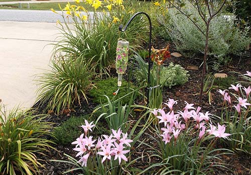 Great-Gardens-NC-lilies