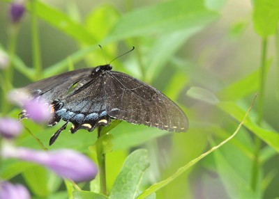 Support North Carolina's Pollinators