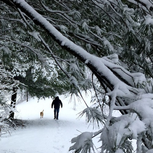 My husband and our sweet dog, Sophie, enjoying a walk after one of our beautiful snowfalls in West Jefferson. —Anita Shelley, West Jefferson