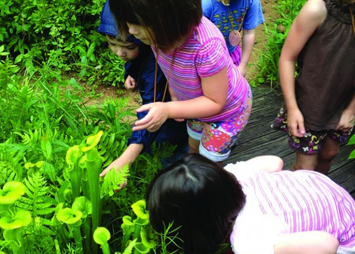 Field Trip: Hands-on Botany