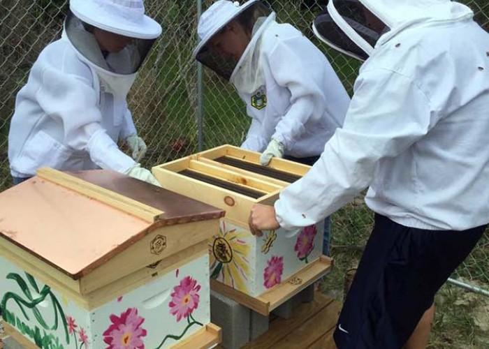 Bright Ideas Spotlight: Cape Hatteras Honey Bees