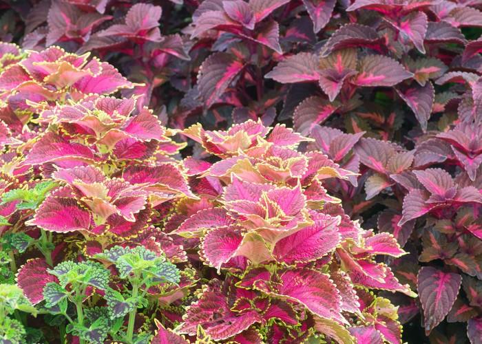 A 'C-List' of Top-Notch Plants