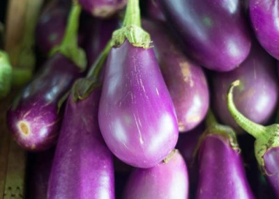 The Incredible, Edible, Ornamental Eggplant