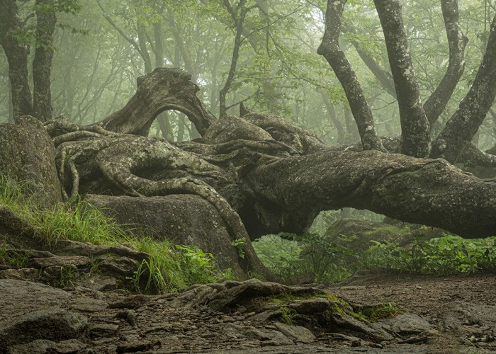 My wife and I drove to Craggy Pinnacle Trail on the Blue Ridge Parkway. A deep fog created a magic scene around this old tree. It looked like a green dragon with three horns and a large eye. —Clarke Cochran, Indian Trail, Union Power Cooperative