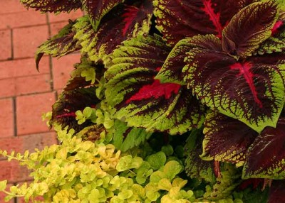 Container Gardening to Extend Seasonal Beauty