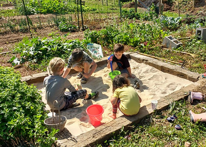 10 Steps to Starting a Community Garden