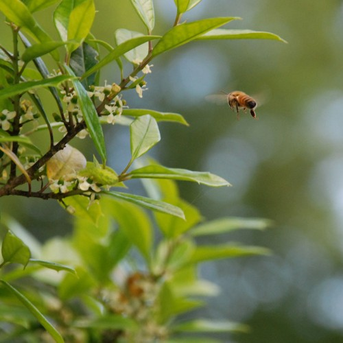 This was the first year my husband and I raised honey bees. In May, our holly tree was in full bloom and you could hear the bees buzzing around it. Holly trees are their favorite. —Corrina Carter, Hillsborough, a member of Piedmont Electric