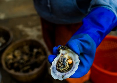 NC's Oyster Trail is an Experience on the Half Shell