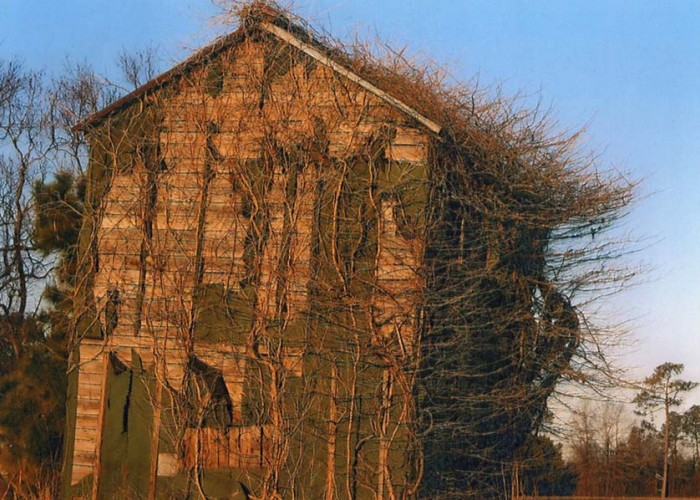This Ole Barn