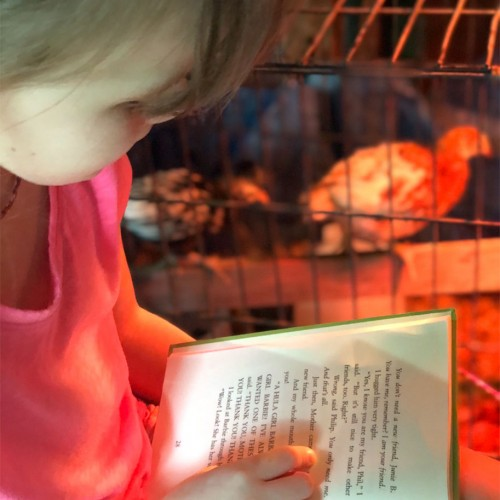 """Bailee Grace, our seven-year-old granddaughter, reads faithfully every day to her baby chicks while they are """"warming up"""" so they won't get bored. —Dina Combs, Sugar Grove, Blue Ridge Energy"""