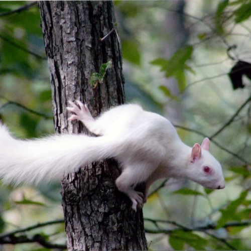 We have lots of squirrels but have never seen a white one. We live in Union County and have been members of Union Power Cooperative for 30 years. —Doug Watson, Indian Trail, A member of Union Power Cooperative
