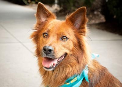 Meet North Carolina's First Dog Travel Agent