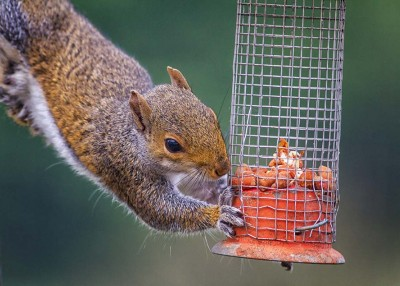 Keep Your Feeder for the Birds