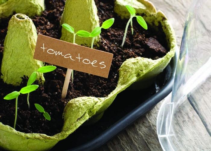 Beginner's Gardening Project