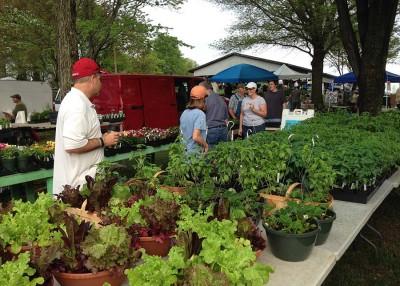 Spring herb festivals help kick off gardening season