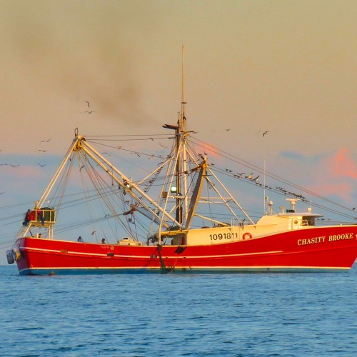As I walked along the beach at Oak Island, I was able to catch a shot of the beautiful, red shrimp trawler, Chasity Brooke. Such a beauty against our Carolina blue sky in the calm sea. —Julie Brock, Oak Island, a member of Brunswick Electric