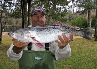 A Meditation on the Speckled Trout