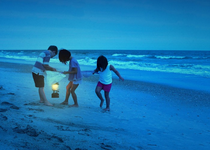 Do You Know...how to find ghost crabs?