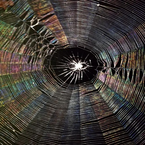 From August to October, my spider friend lived between deck posts and removed insects every night. During the day she would run to the top of the web if I went by and then return to center after I passed. —Lesa Aldridge, Wake Forest, Wake Electric