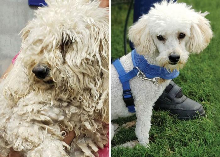 Amazing Shelter Dog Makeovers