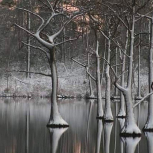 After a big snowfall, a friend and I grabbed our camera gear and went driving around the country taking photos. Came across this pond and I loved how the snow was on the trees. —Marilyn Britt, Evergreen, Brunswick Electric