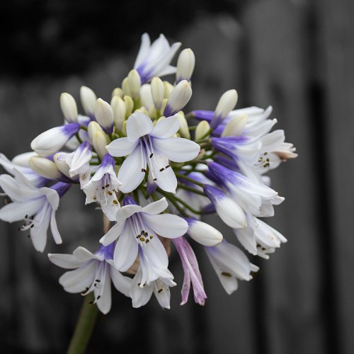 The bright whites and purples in this blossoming flower brought out a feeling of hope for fresh opportunities in a new city against a backdrop of fading memories of the past. —Meg Weidman, Carolina Beach