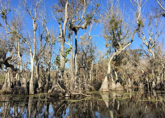 North Carolina's 'Enchanted Forest'