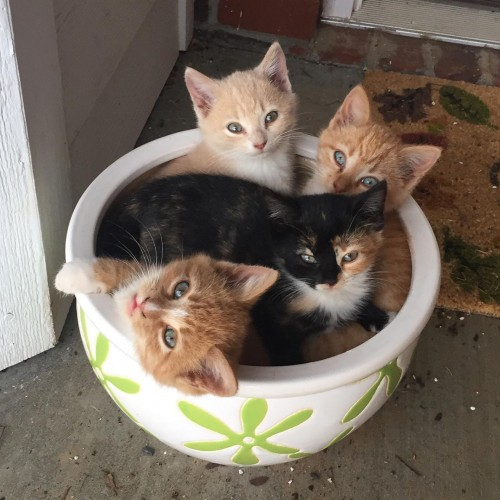 These kittens were a surprise to our family—since we do not have a cat! A stray cat decided to have kittens right outside our basement door. This is their favorite place to nap. —Meredith Gallimore, Lexington, EnergyUnited