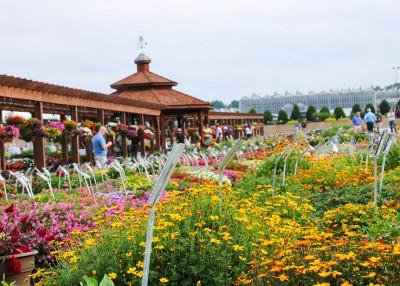 Metrolina Greenhouses Has Flower Power