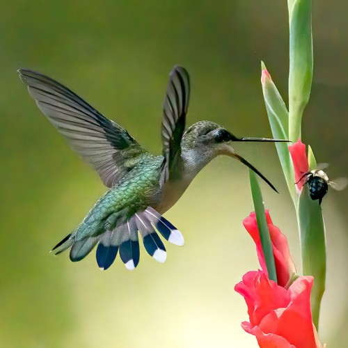 I felt lucky to capture this hummingbird fighting with a bee in my garden. —Nhat Vu, Mint Hill, Union Power Cooperative