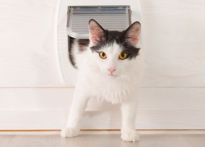 Energy Considerations for Pet Doors