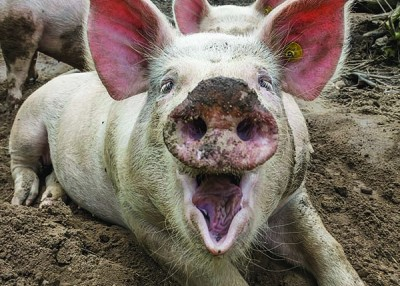 From Our Readers: A Happy Pig and Thunderstorms