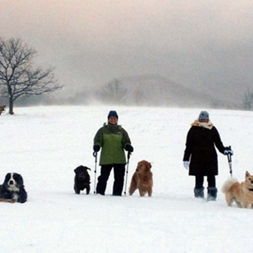 On Thanksgiving Day in 2015, 13 inches of snow fell on the N.C. mountains. Shawn, Kim and their dogs, Merle, Sarah, Leela, Sosa and Cleo explore the early snow at Yellow Mountain Ranch. —Shawn Caldwell, Charlotte, Brunswick EMC