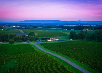 Local Flavors at Yadkin Valley Wineries