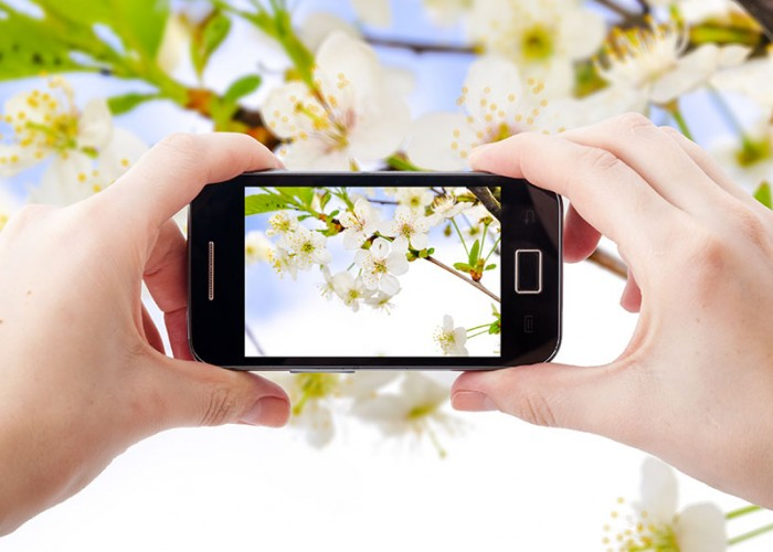 Smartphone Photography Quick Tips