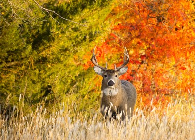 Beginner Tips for Becoming a Hunter