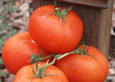 Two-Minute Tomatology