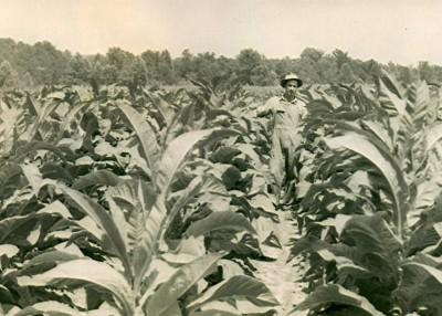 Tobacco Farm Days