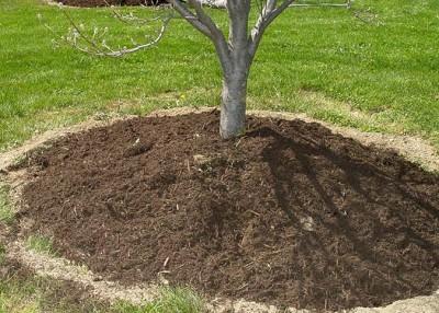 Gardening blunders