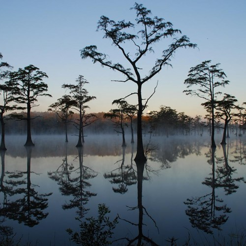 I took this picture on the way to work (Campbell Soup Company) early one morning. This pond is located on Highway 72 between Lumberton and Red Springs. —Warren Westbury, Lumberton, Lumbee River EMC